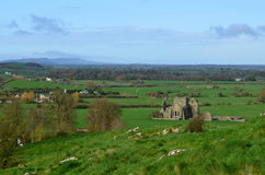 Ruins of Hore Abbey in a Lush Field Royalty Free Stock Photo