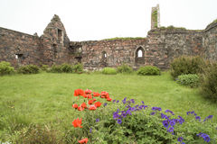 Ruins Iona Nunnery Royalty Free Stock Image
