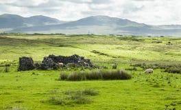 Ruins on Islay. Ruins of old farm building on island of Islay on west coast of Scotland stock photo