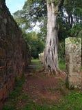 Ruins of jesuit missions san ignacio mini in misiones in argentina Royalty Free Stock Photo