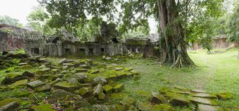 Ruins in jungle Royalty Free Stock Images