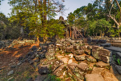 Ruins in jungle Angkor Wat Siem Reap, Cambodia. Royalty Free Stock Images