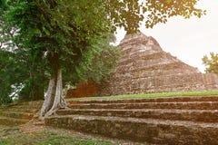 Ruins of maya pyramid Stock Images