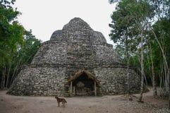 Ruins of mayan Pyramid in Coba. stock photo