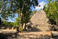 Ruins of Mayan pyramid in jungle, Coba, Yucatan Royalty Free Stock Images