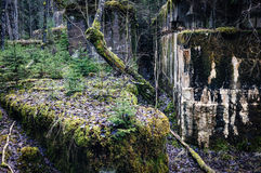 Ruins and moss Royalty Free Stock Images
