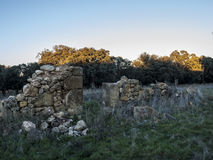 Ruins among oaks Royalty Free Stock Photography