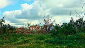 Ruins of an old abandoned house in the summer landscape, color p stock photo