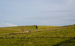 Ruins of an old farmhouse next to a dead tree in the fields of t royalty free stock images