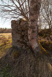 Ruins of the old stone house which have grassed and a moss. Stock Photo