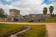 Ruins and palm trees in the archaeological area. Tulum, Mexico, Yucatan, Riviera Maya.  royalty free stock images