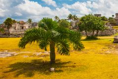 Ruins and palm trees in the archaeological area. Tulum, Mexico, Yucatan, Riviera Maya.  royalty free stock photos