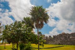 Ruins and palm trees in the archaeological area. Tulum, Mexico, Yucatan, Riviera Maya.  stock images