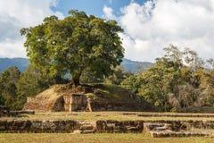 Ruins of the pre-hispanic Mayan town Iximche Stock Photos
