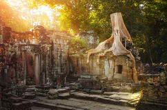 On the ruins of Preah Khan temple complex in Cambodia. Stock Photo
