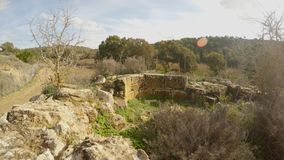 Ruins and remains of an ancient Christian church near the old olive garden and forest of the times of King Richard the Lionheart. Ancient Olive Trees, a stock video footage