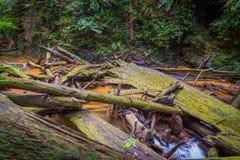 Ruins of river. This photo was shot at Kota Tinggi of Malaysia Royalty Free Stock Images