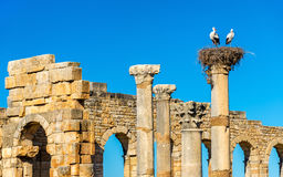 Ruins of a roman basilica at Volubilis, Morocco Royalty Free Stock Images