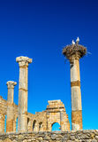 Ruins of a roman basilica at Volubilis, Morocco Stock Images