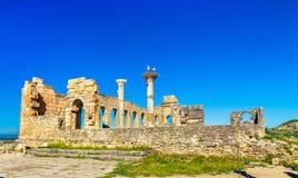 Ruins of a roman basilica at Volubilis, Morocco Stock Image