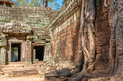Ruins. Roots with Stone in Angkor Complex Royalty Free Stock Photo