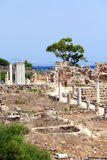 Ruins of Salamis near Famagusta Royalty Free Stock Images
