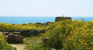 The ruins and the sea. Great view of the sea in the archaeological park of Selinunte Royalty Free Stock Photo