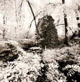 Ruins of Stone House in Woods Stock Photography