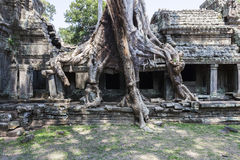 Ruins and Strangler Fig Tree in Preah Khan Royalty Free Stock Image