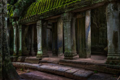 The Ruins of Ta Prohm Royalty Free Stock Photography