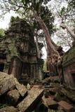 Ruins of Ta Prohm, Angkor, Cambodia Royalty Free Stock Image