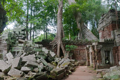 Ruins of Ta Prohm Royalty Free Stock Photography