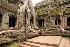 Ruins of Ta Prohm Stock Photography