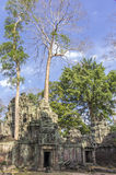 Ruins of Ta Prohm in Siem Reap, Cambodia. Ta Prohm temple at Angkor, Siem Reap province, Cambodia Stock Image