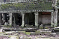 Ruins of the Ta Prohm temple in Angkor / Camobodia Stock Image