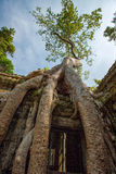 Ruins of Ta Prohm temple. Ruins of  Ta Prohm temple in Angkor Wat, near Siem Reap, Cambodia, South East Asia Royalty Free Stock Photos