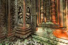 Ruins of Ta Prohm temple. Ruins of  Ta Prohm temple in Angkor Wat, near Siem Reap, Cambodia, South East Asia Stock Photo