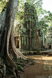 The ruins of Ta Prom Temple, Angkor Historical Park, Siem Reap, Cambodia. Royalty Free Stock Photo