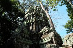 The ruins of the temple complex of Ta Prohm in Cambodia. Architectural heritage of the Khmer Empire. A masterpiece of world. Architecture stock photos