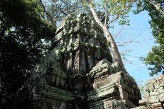 The ruins of the temple complex of Ta Prohm in Cambodia. Architectural heritage of the Khmer Empire. A masterpiece of world. Architecture royalty free stock photos