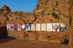 Ruins of Teutonic Castle in Torun, Poland Royalty Free Stock Photo
