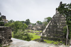 Ruins of Tikal. View from the top of a piramid in the national park of Tikal with the panorama of the central plaza of the mayan ruins Royalty Free Stock Images