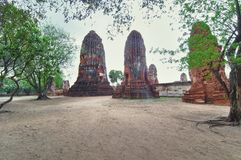 Ruins with trees from Ayutthaya Stock Photography