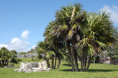 Ruins of Tulum. Mayan ancient ruin in archaeological site of Tulum, Mexico stock photography