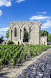 Ruins and vines Saint-Émilion France Royalty Free Stock Images