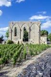 Ruins and vines Saint-Émilion France Royalty Free Stock Images
