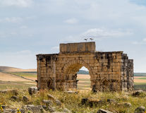 Ruins at Volubilis Morocco Royalty Free Stock Photos