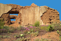Ruins and wild flowers - South Africa Stock Photography