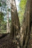 Ruiny antyczna Beng Mealea ?wi?tynia nad d?ungl?, Kambod?a fotografia royalty free