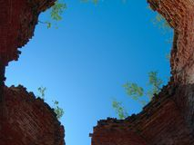 Ruiny dach świątynia, przerastający z drzewami, inside widok zdjęcie royalty free